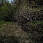 This fence was badly damaged by tree growth